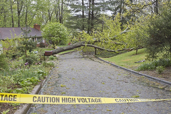 high voltage caution tape around a fallen tree after storm